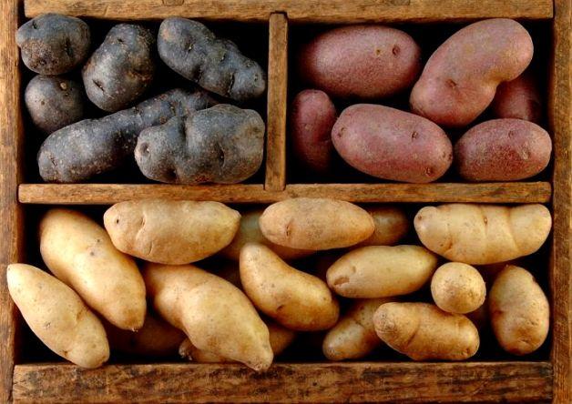 Как сохранить картошку на балконе зимой