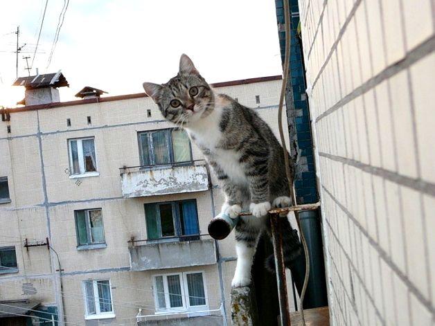 Отпугиваем голубей с балкона
