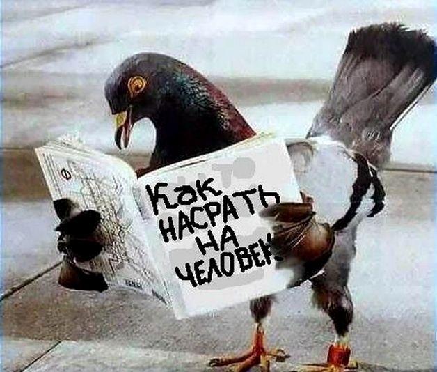 Избавляемся от голубей на балконе