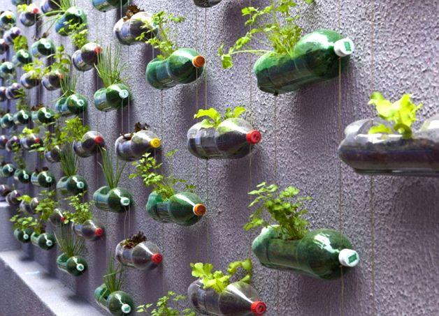 Растения в пластиковых бутылках
