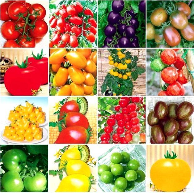 Разные виды помидор